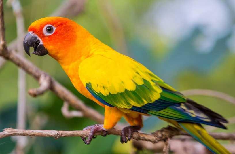 Kuş Sağlığı ve Hastalıkları