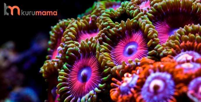 mercan neyle beslenir