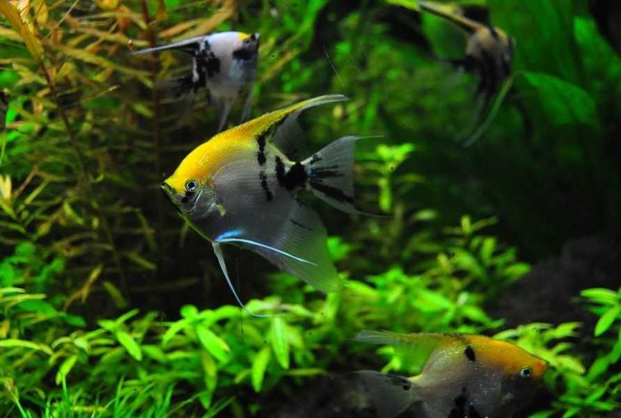 Sağlıklı Balık İpuçları