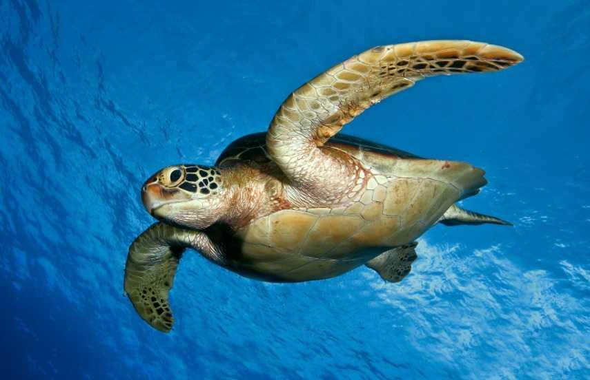 Su kaplumbağası bakımı