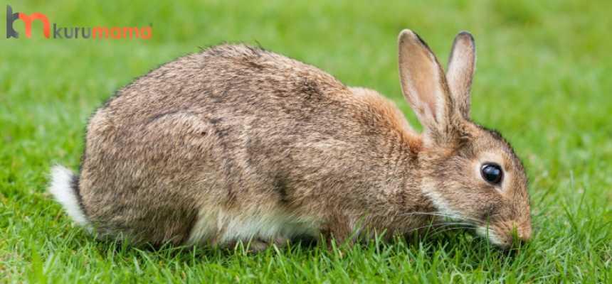 tavşan bakımı nasıl yapılır