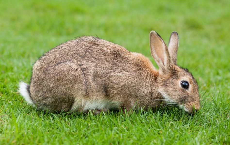 Tavşan bakımı nasıl yapılır?