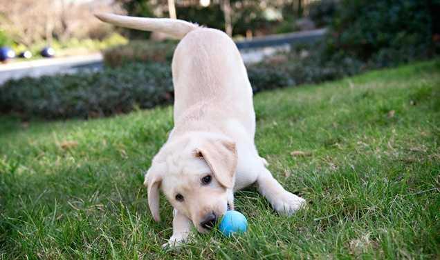 Apartmanda yaşıyorsak hangi köpekleri tercih etmeliyiz?