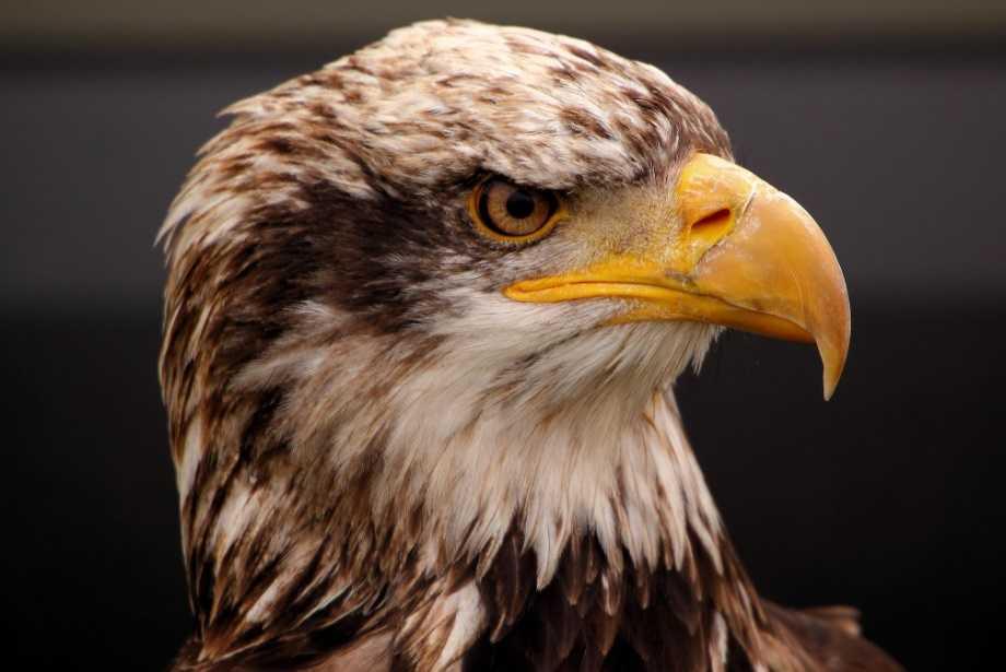 Dünyanın en yüksek noktasından uçan kuş