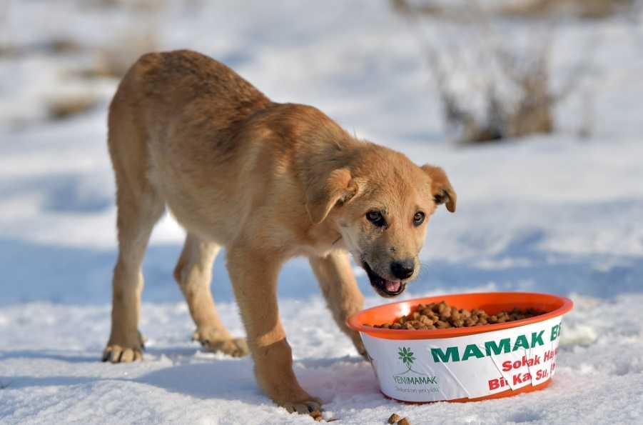 Kış geldi, sokak hayvanlarını unutmayalım!