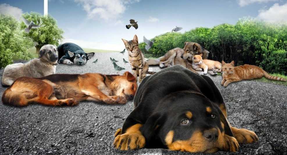 Sokakta yaralı hayvan görünce ne yapmalıyız?