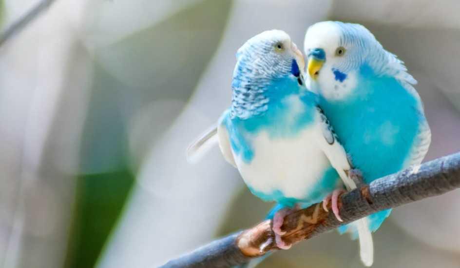 En Iyi Muhabbet Kuşu Yemleri Evcil Hayvan Bloğu