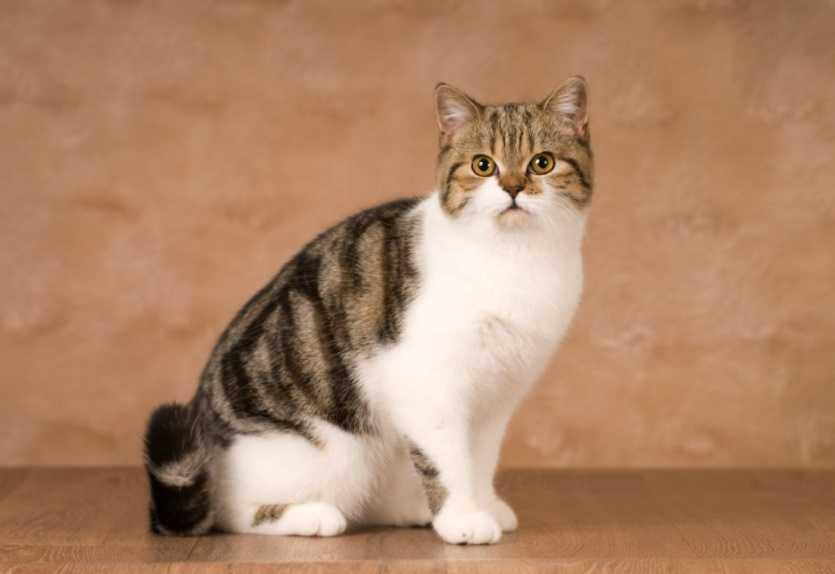 Erkek kediler ne zaman kısırlaştırılmalı?