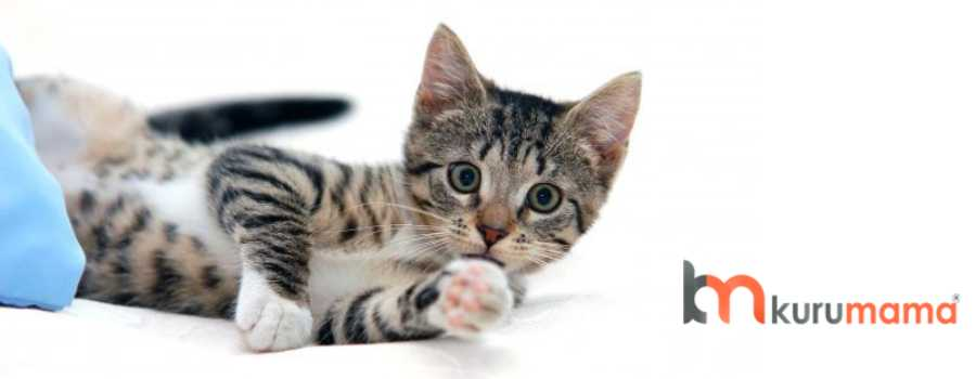 erkek kedilerde kısırlaştırma