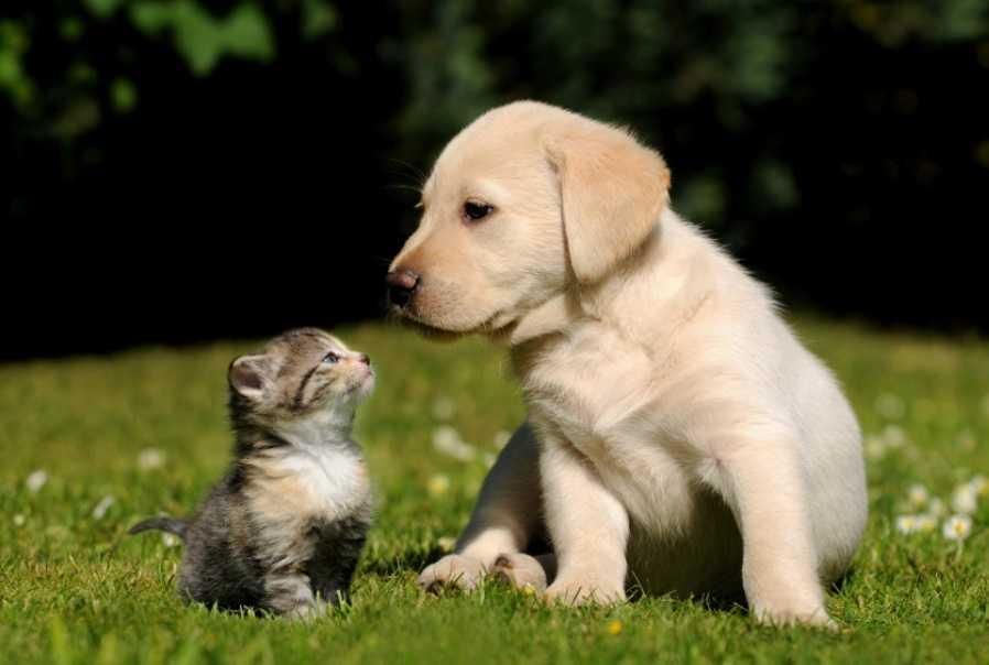 Köpek satın alırken dikkat edilmesi gerekenler
