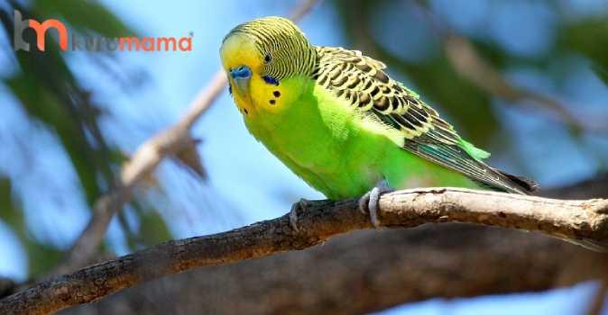 muhabbet kuşları neden ishal olur