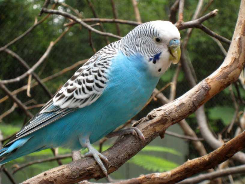 Vitakraft kuş yemleri