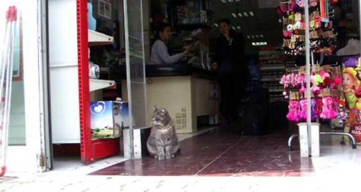 Duman 38 kedi evine ilham kaynağı oldu