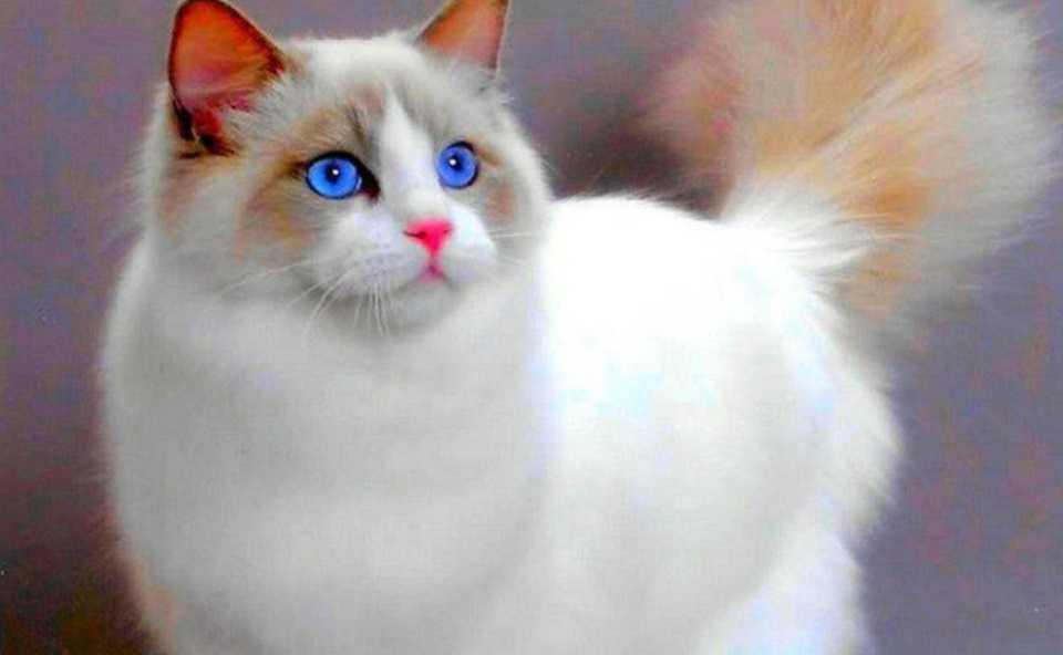 En Güzel kedi resimleri