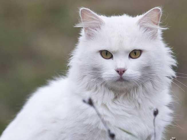 En Güzel kedi resimleri 10