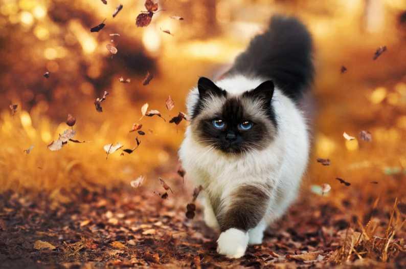 En Güzel kedi resimleri 11
