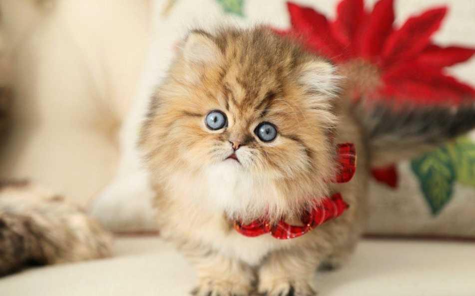 En Güzel kedi resimleri 12