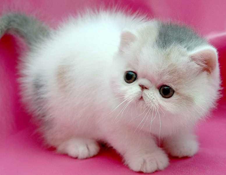 En Güzel kedi resimleri 13