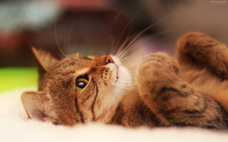 En Güzel kedi resimleri 15