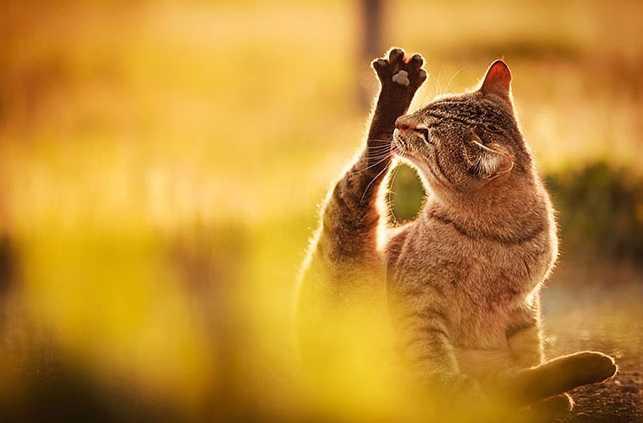 En Güzel kedi resimleri 16