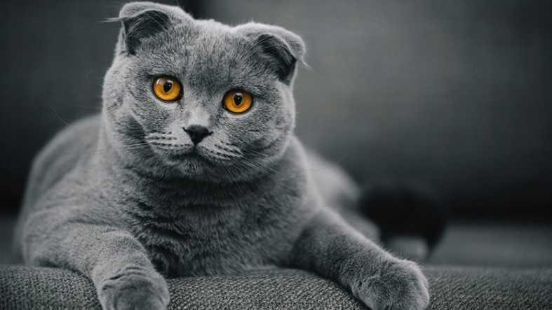 En Güzel kedi resimleri 17