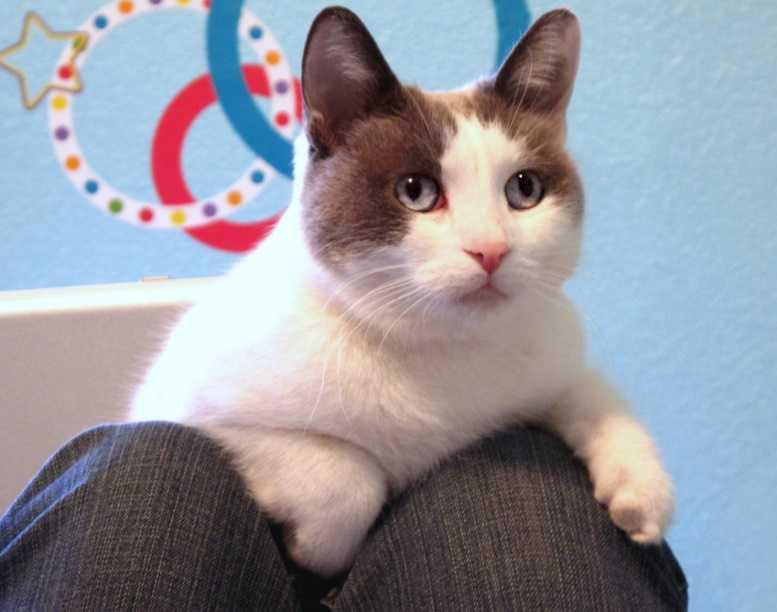 En Güzel kedi resimleri 19