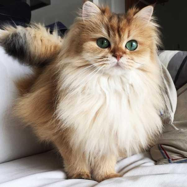 En Güzel kedi resimleri 20