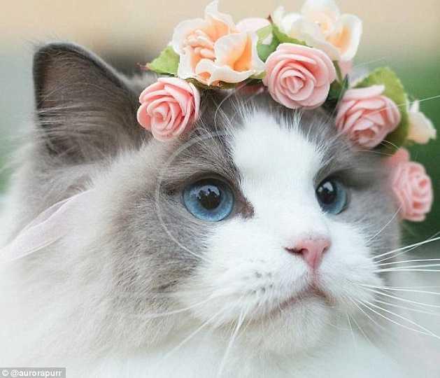 En Güzel kedi resimleri 3