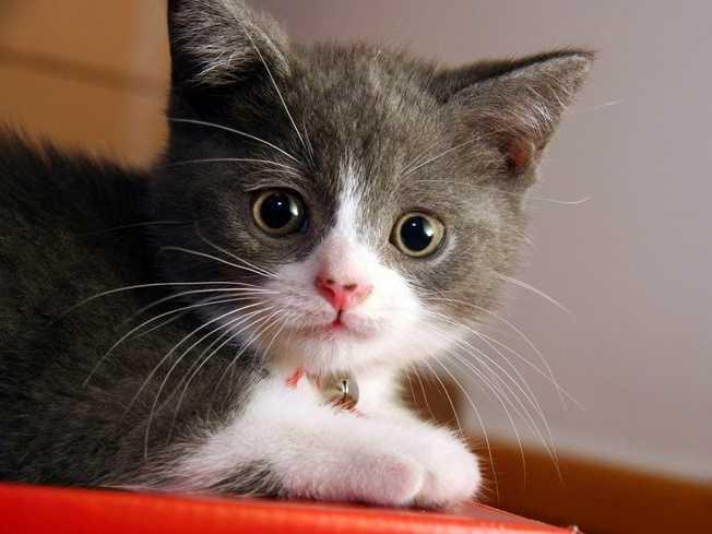En Güzel kedi resimleri 4