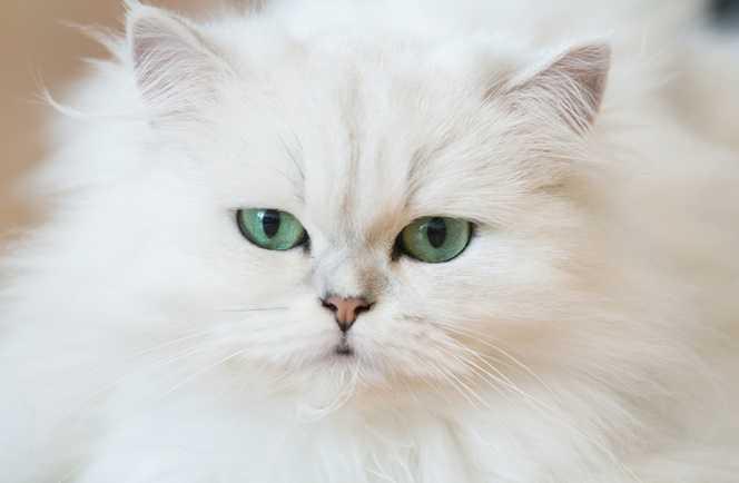 En Güzel kedi resimleri 5