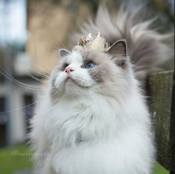 En Güzel kedi resimleri 6