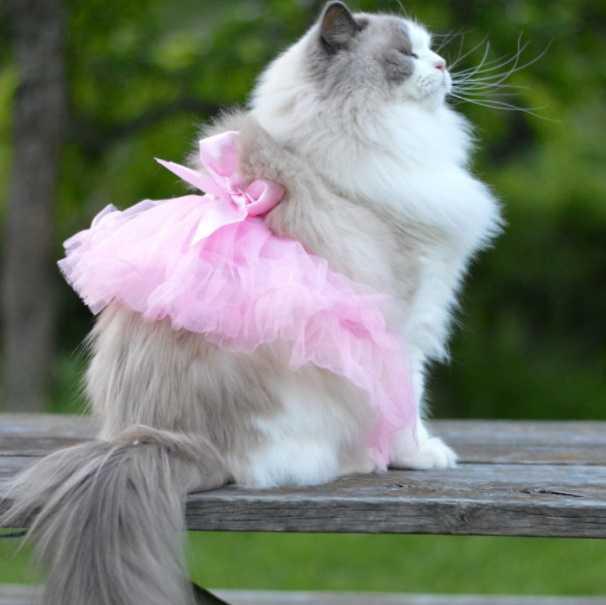 En Güzel kedi resimleri 7