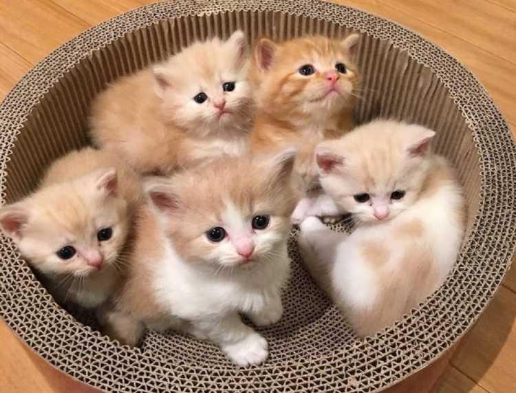 En Güzel kedi resimleri 8