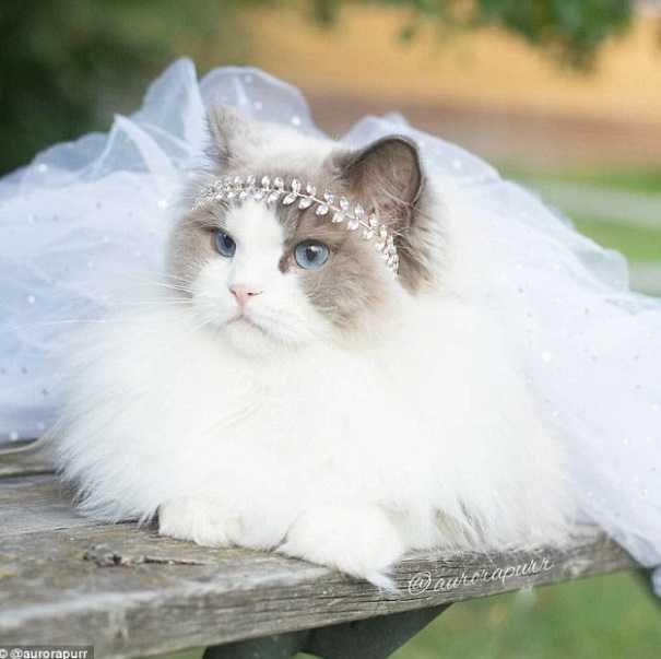 En Güzel kedi resimleri 9