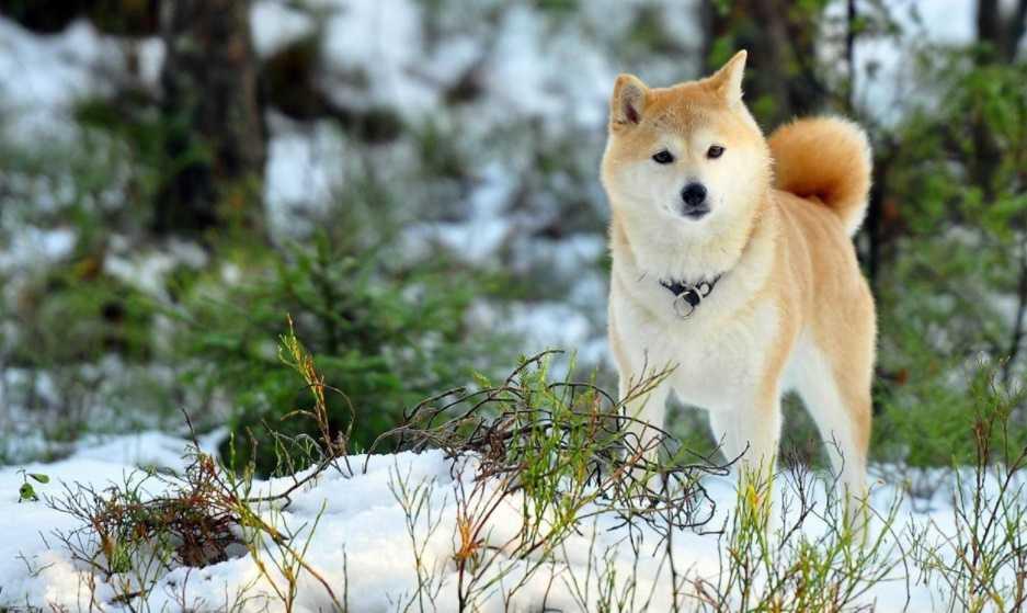 En Güzel köpek resimleri 10
