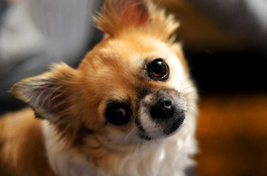 En Güzel köpek resimleri 11