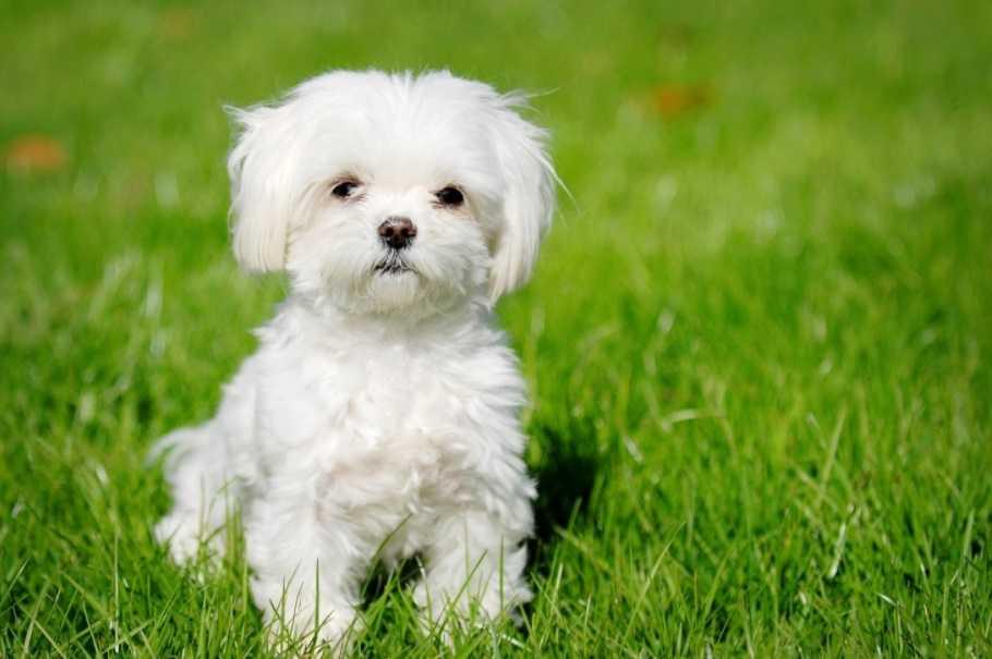 En Güzel köpek resimleri 13