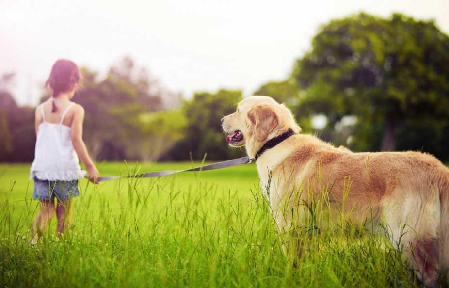 En Güzel köpek resimleri 14