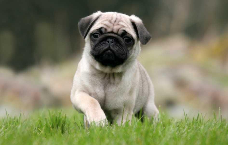 En Güzel köpek resimleri 15