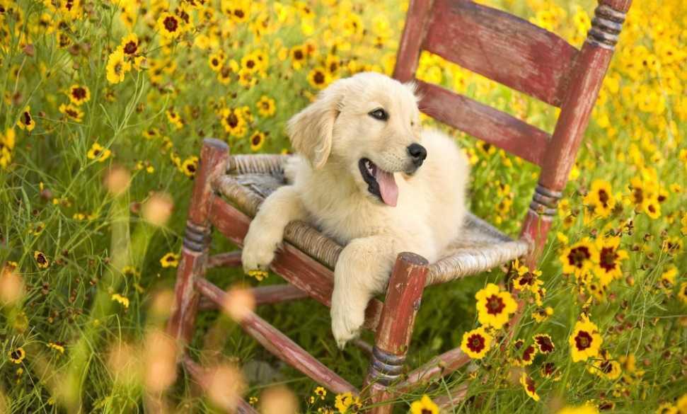 En Güzel köpek resimleri 4
