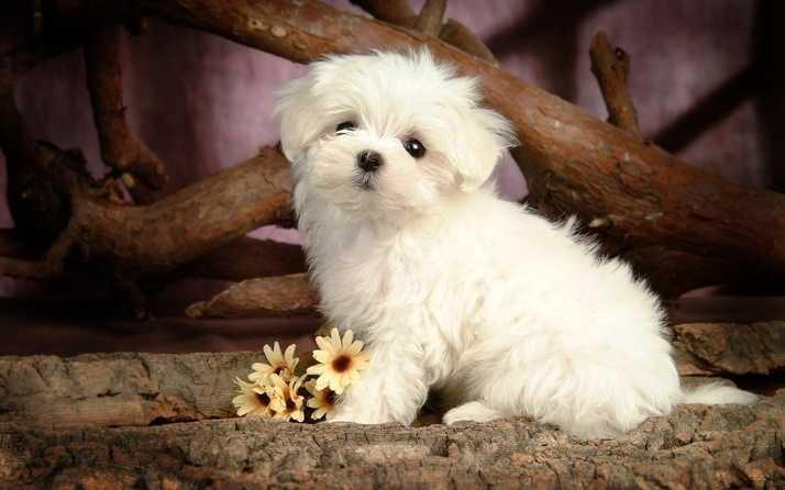 En Güzel köpek resimleri 6