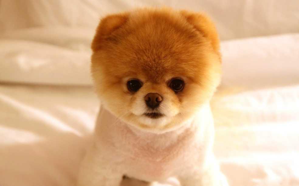 En Güzel köpek resimleri 9