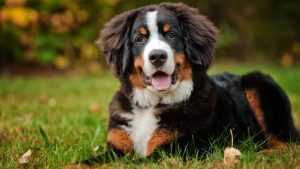 hareketli köpek maması