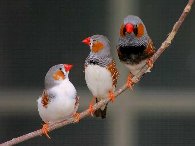 Evcil kuş resimleri