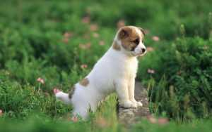 En Güzel köpek resimleri 16
