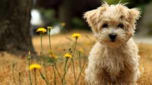 En Güzel köpek resimleri 24