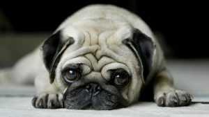 En Güzel köpek resimleri 18