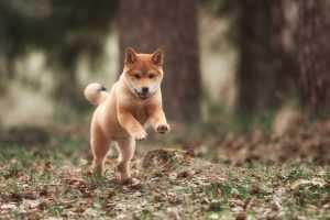 En Güzel köpek resimleri 19