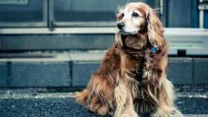 En Güzel köpek resimleri 17