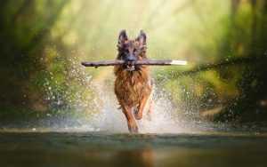 En Güzel köpek resimleri 20